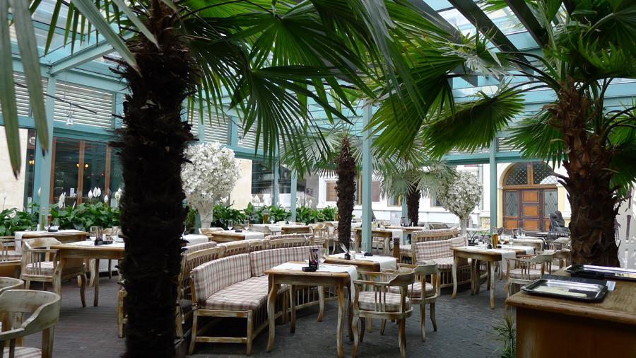 Terasa cu palmieri